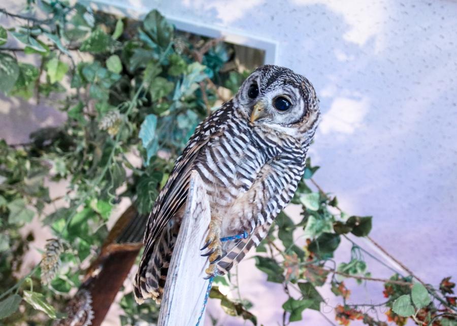 Forest of Owl – Eulen Café in Akihabara Tokyo