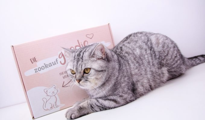 Die GoodieBox für Katzen bei zookauf-shop + Gewinnspiel